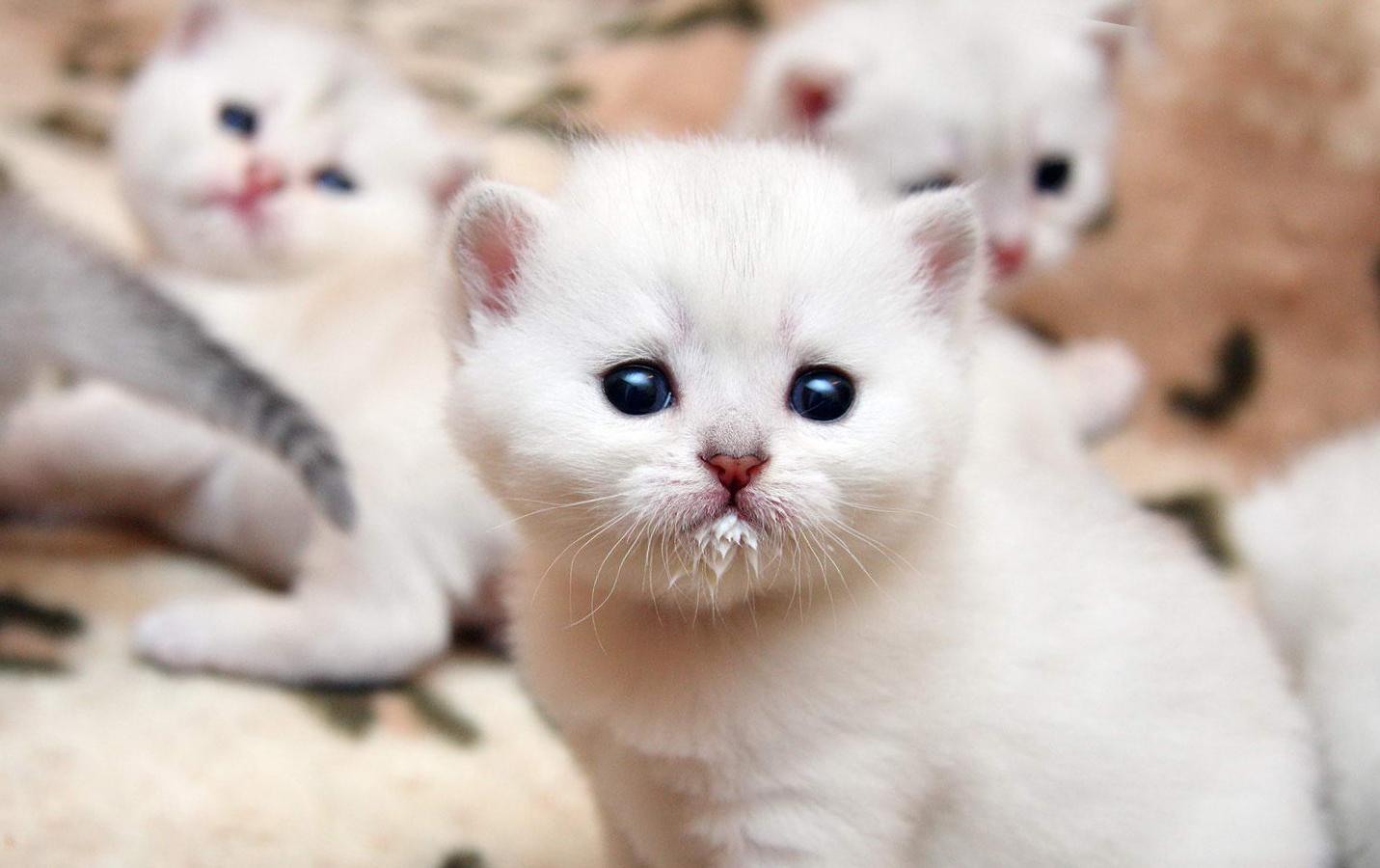 Фото К чему снятся котята много маленьких